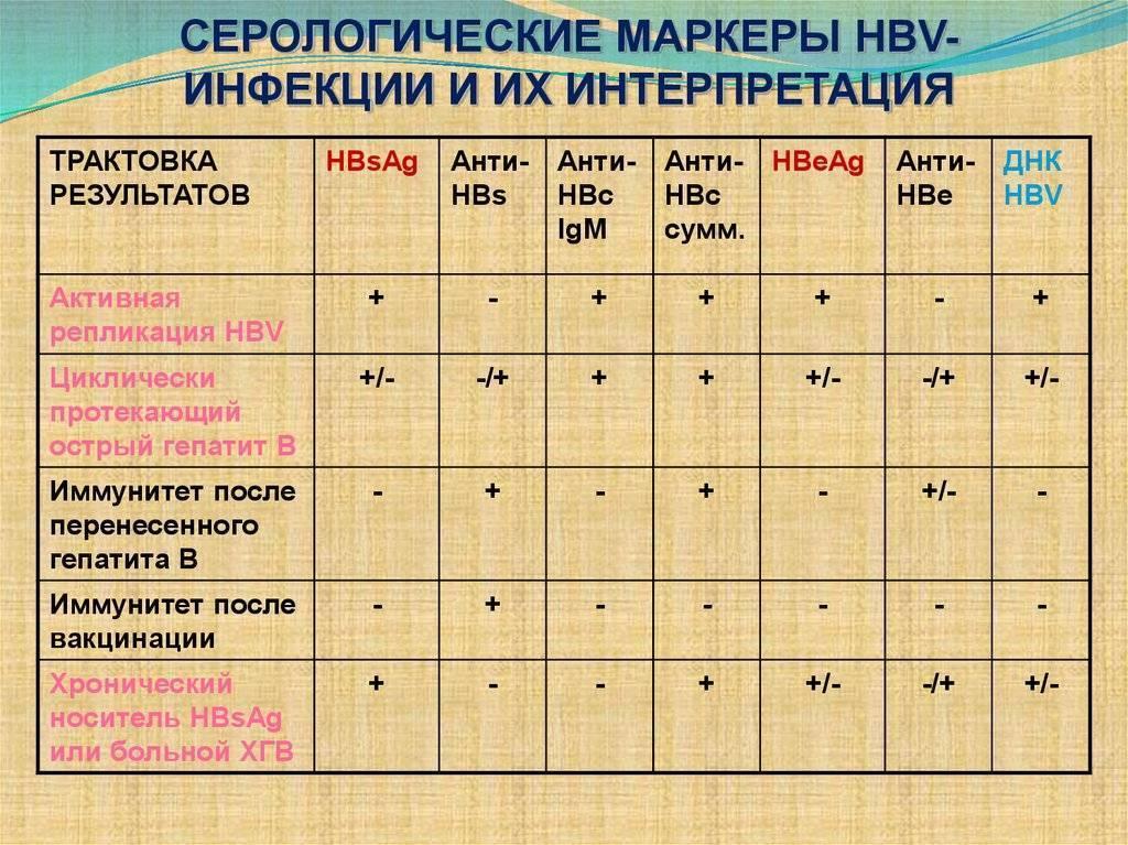 антитела гепатита в