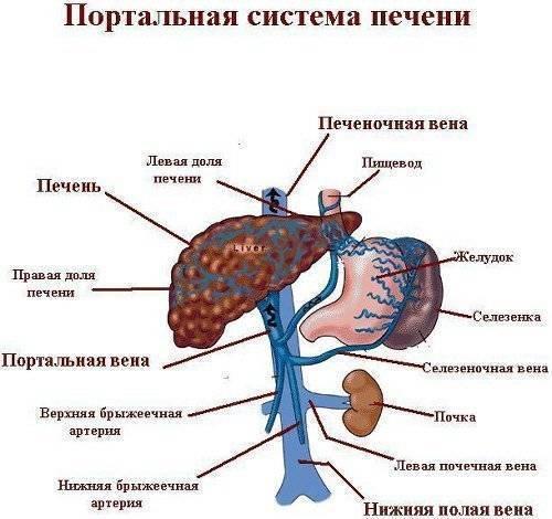 Признаки и лечение портальной гипертензии при циррозе печени