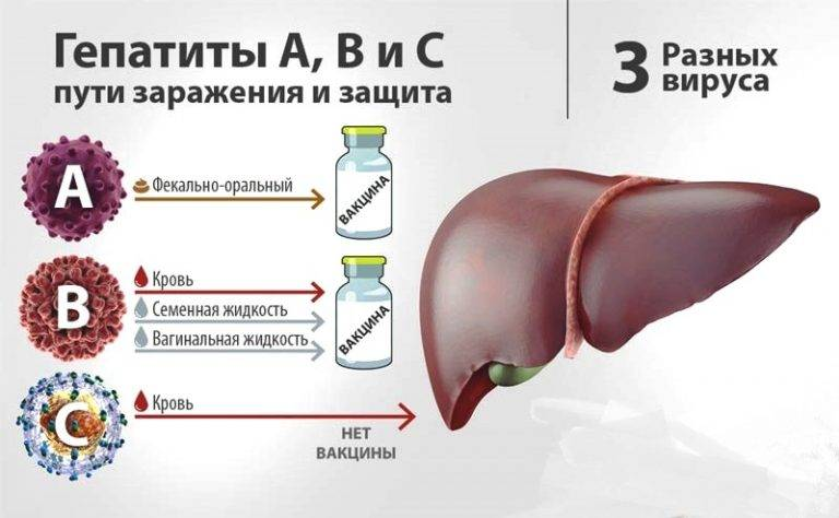 хронический вирусный гепатит б
