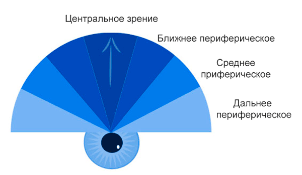 Периферическое зрение упражнения. периферийное зрение: особенности, нарушения и тренировка. строение сетчатки глаза: палочки и колбочки