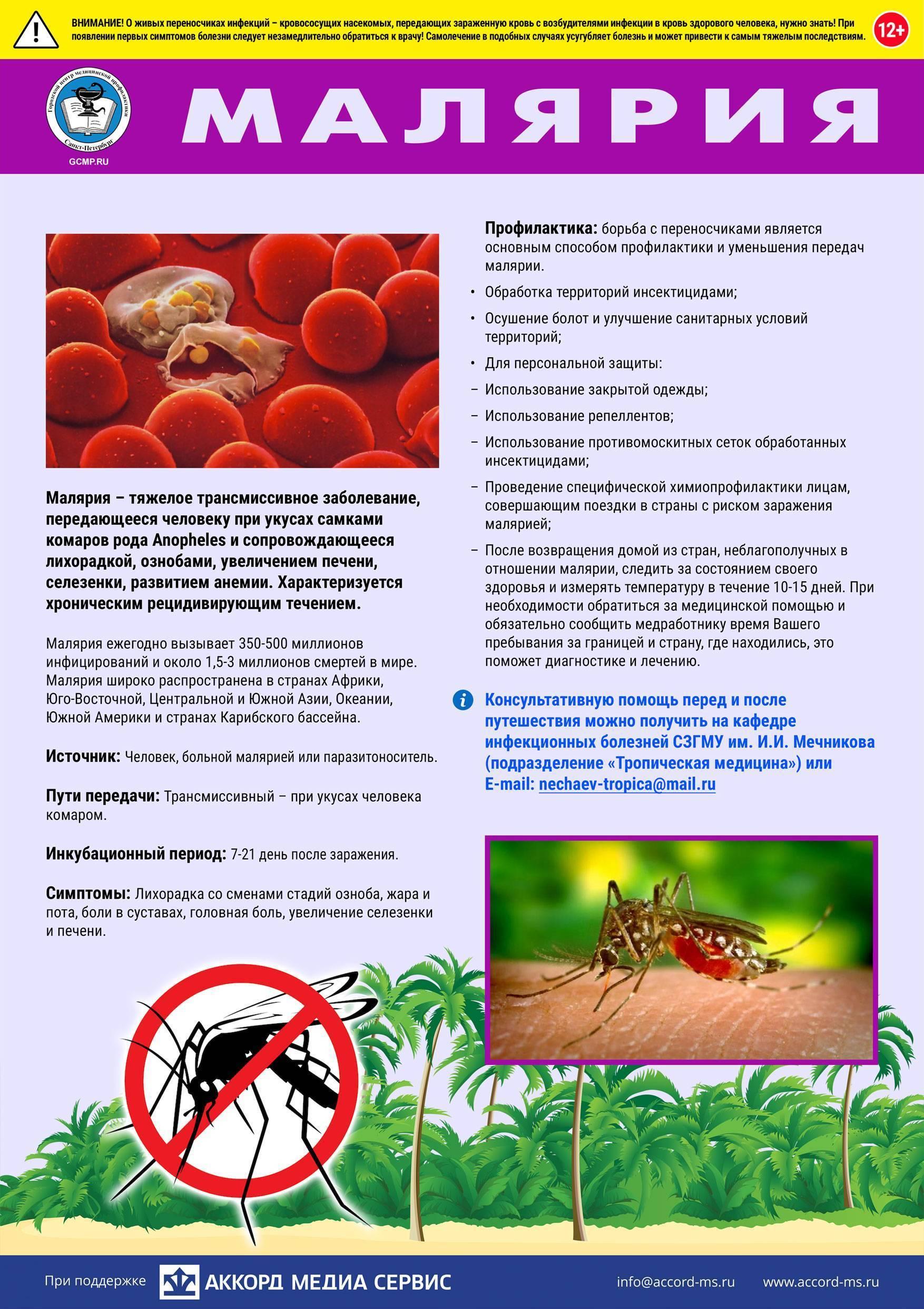 Малярийный плазмодий: цикл развития, чем опасен для человека