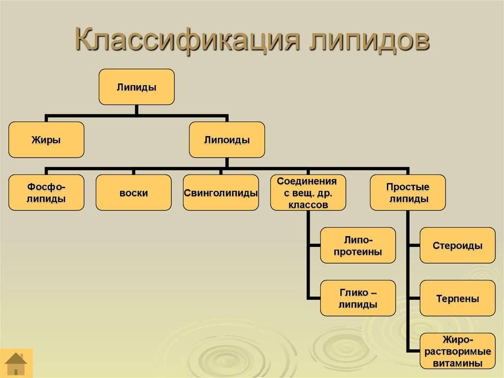 классификация липидов таблица