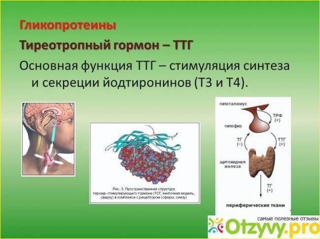 ттг при раке щитовидной железы