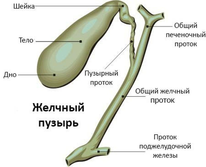 Симптомы и способы лечения закупорки желчных протоков
