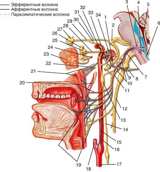идиопатическая невралгия языкоглоточного нерва