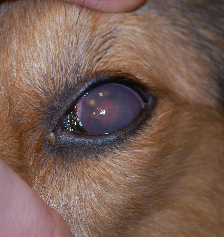 Заметное ухудшение зрения провоцирует отек роговицы