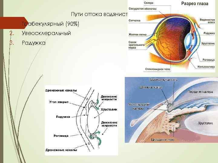 А вы знаете, чего нельзя категорически делать при глаукоме, а что можно?
