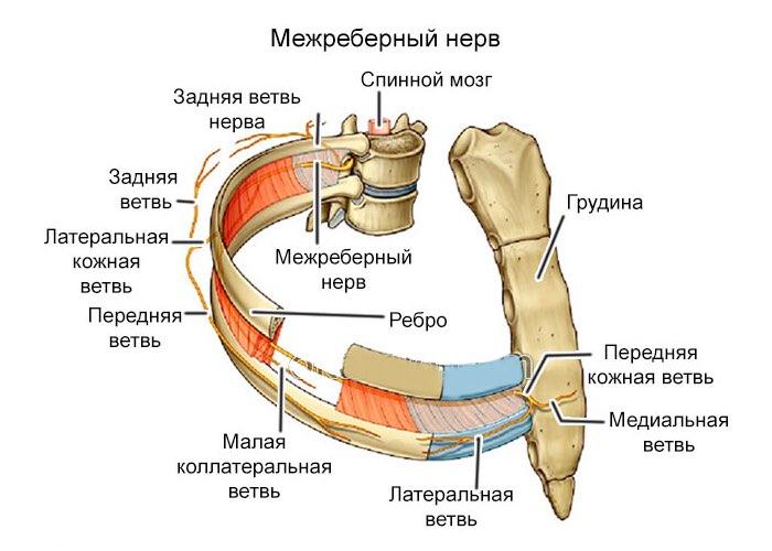 симптомы межреберной невралгии слева и лечение