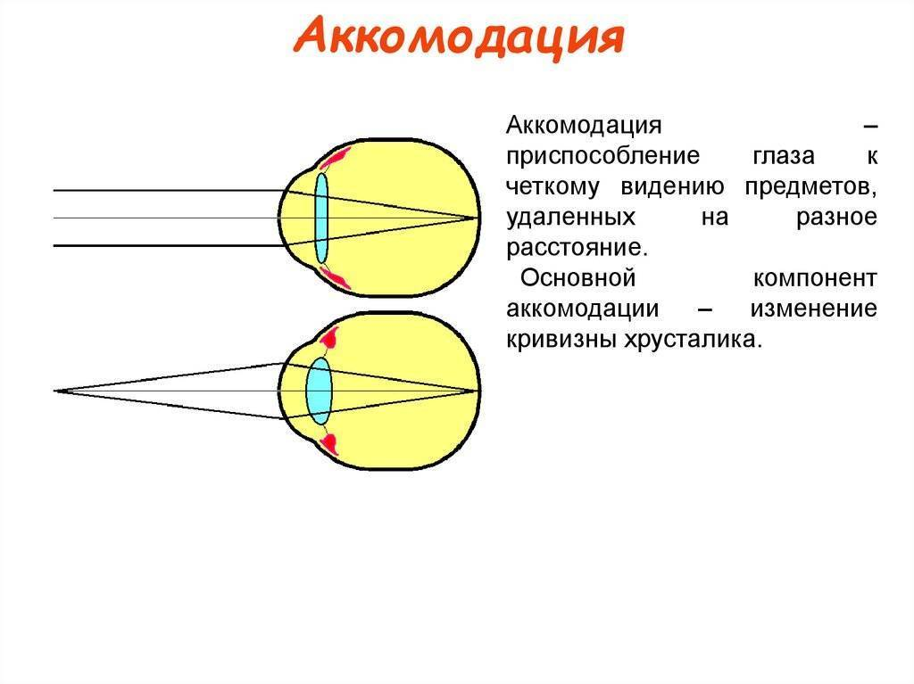 Описание процесса аккомодации глаз и виды расстройств