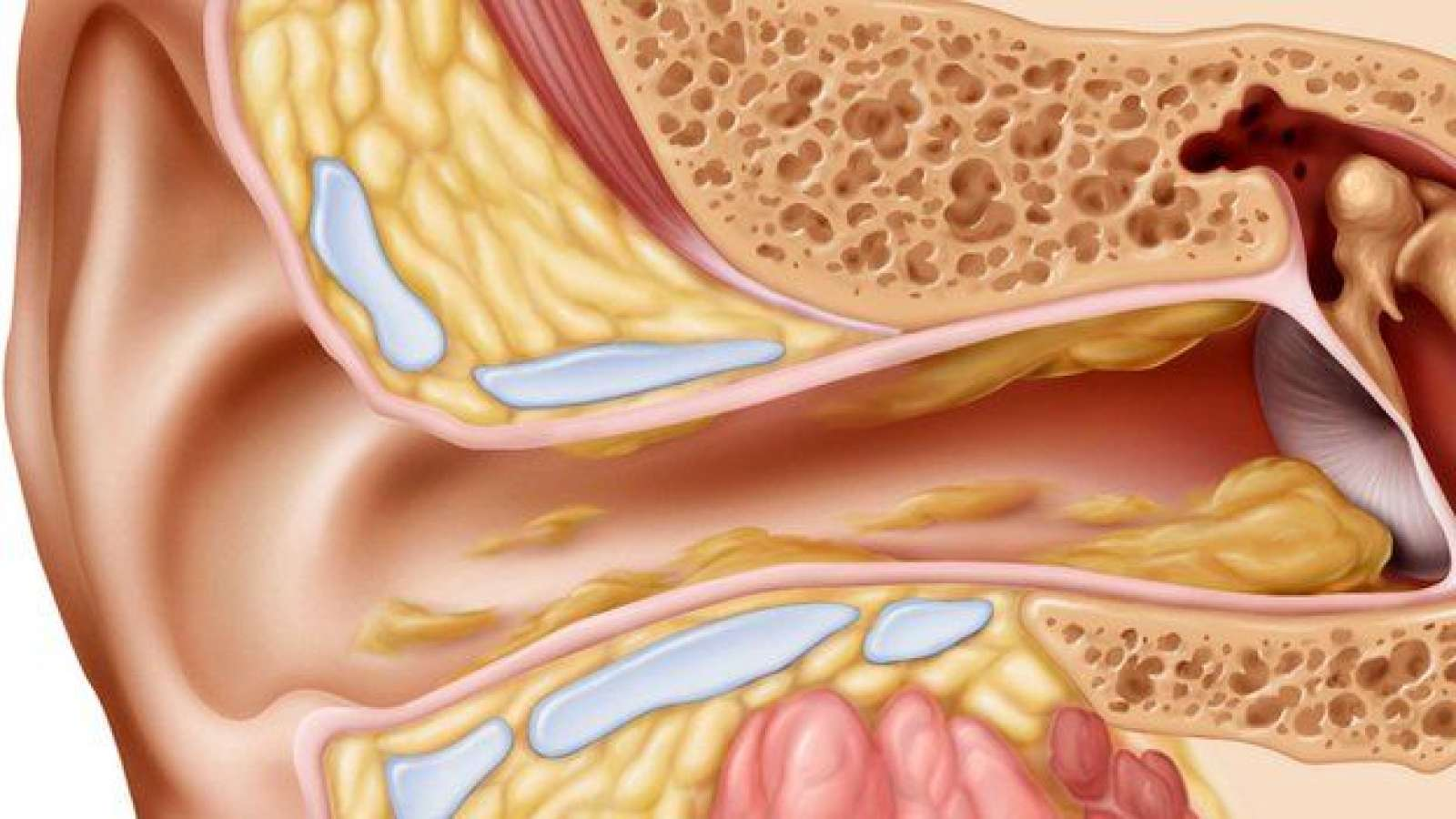 Отит уха – причины, виды, симптомы, диагностика, лечение