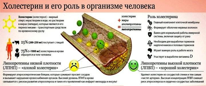 Симптомы и признаки повышенного холестерина в организме