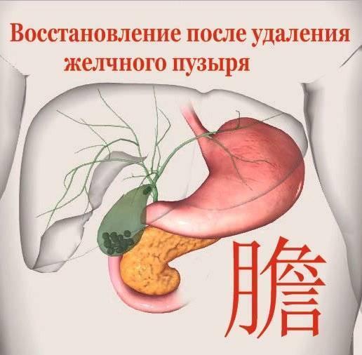 Жизнь после удаления желчного пузыря (холецистэктомии) / гастроцентр эксперт