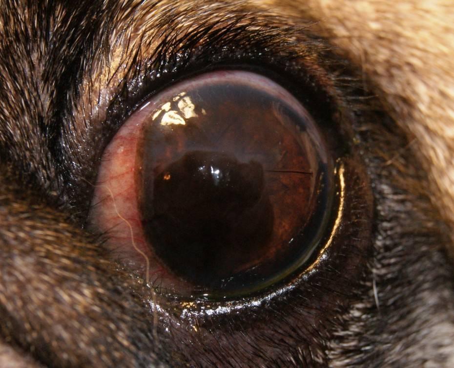 воспаление роговицы глаза причины