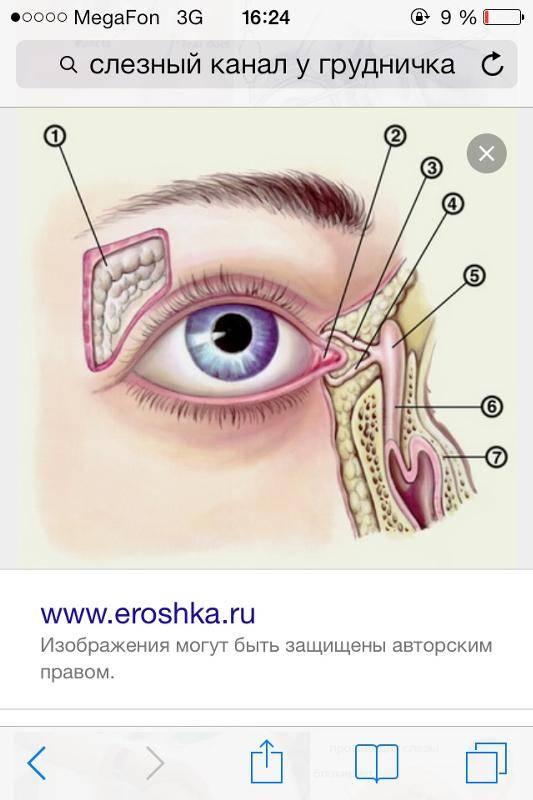 Непроходимость слезного канала (дакриоцистит) (памятка) - запись пользователя нелли (yllen) в дневнике - babyblog.ru