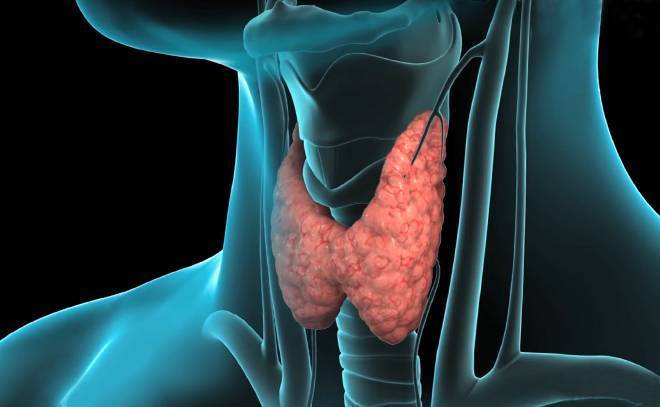 щитовидная железа тестостерон