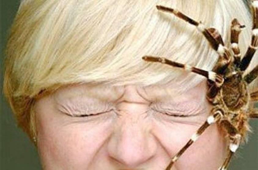 Боязнь пауков — как называется фобия