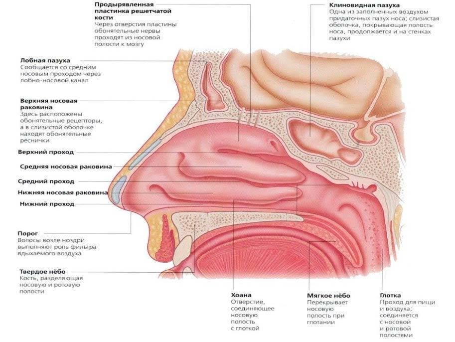 Атрофия слизистой носа: причины, симптомы, диагностика и лечение