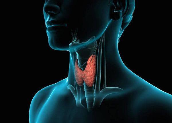 Щитовидка и давление лечение