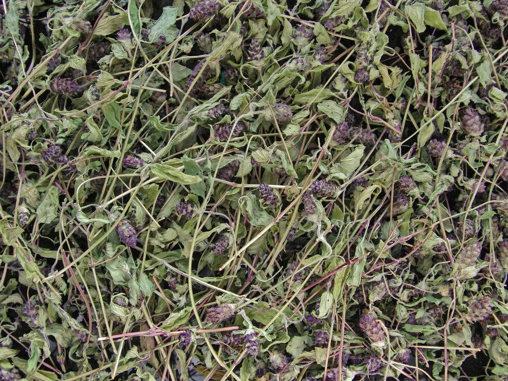 лечение горла травами