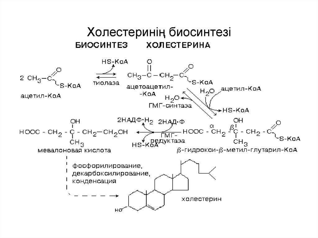 Норма холестерина по возрасту и полу [наглядная таблица]