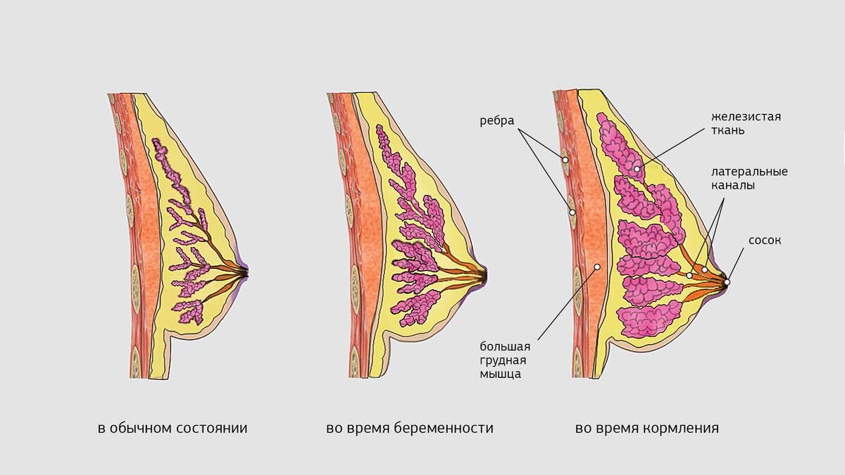 почему набухла и болит грудь