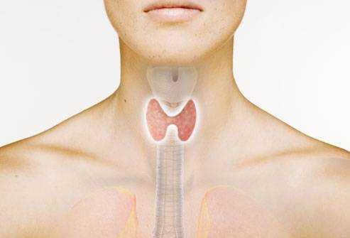 Гормоны щитовидной железы биохимия лекция