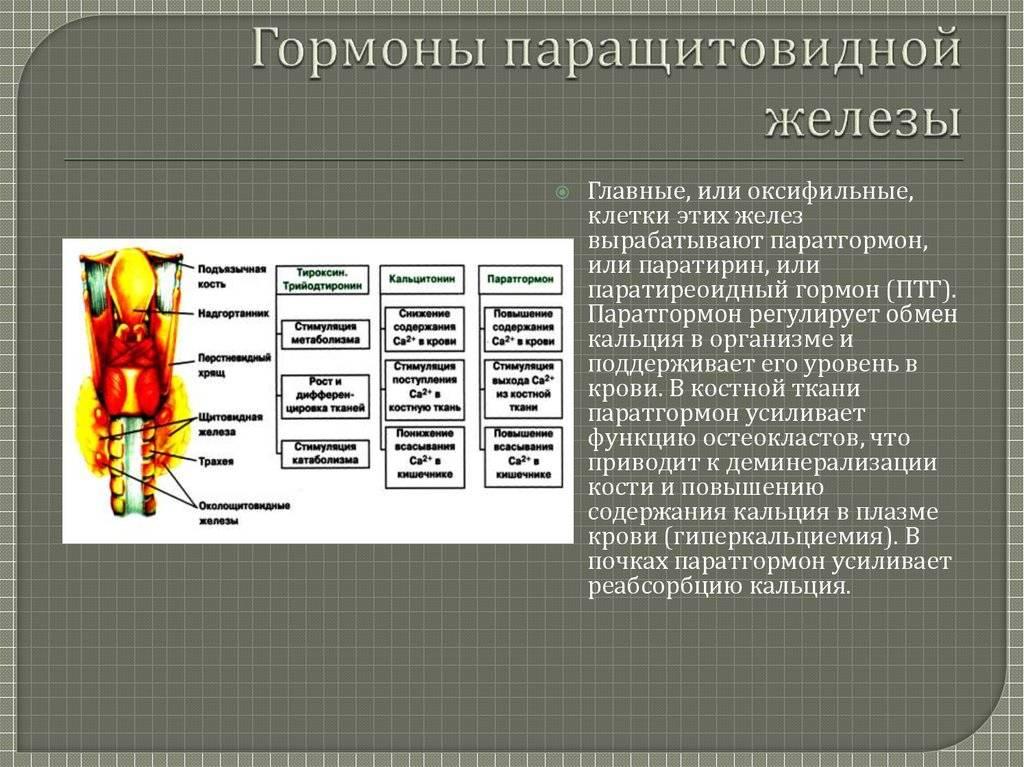 Гормоны щитовидной (функции тироксина) и паращитовидной желез (паратгормон)