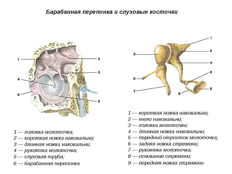 Перфорация или разрыв барабанной перепонки и ее лечение