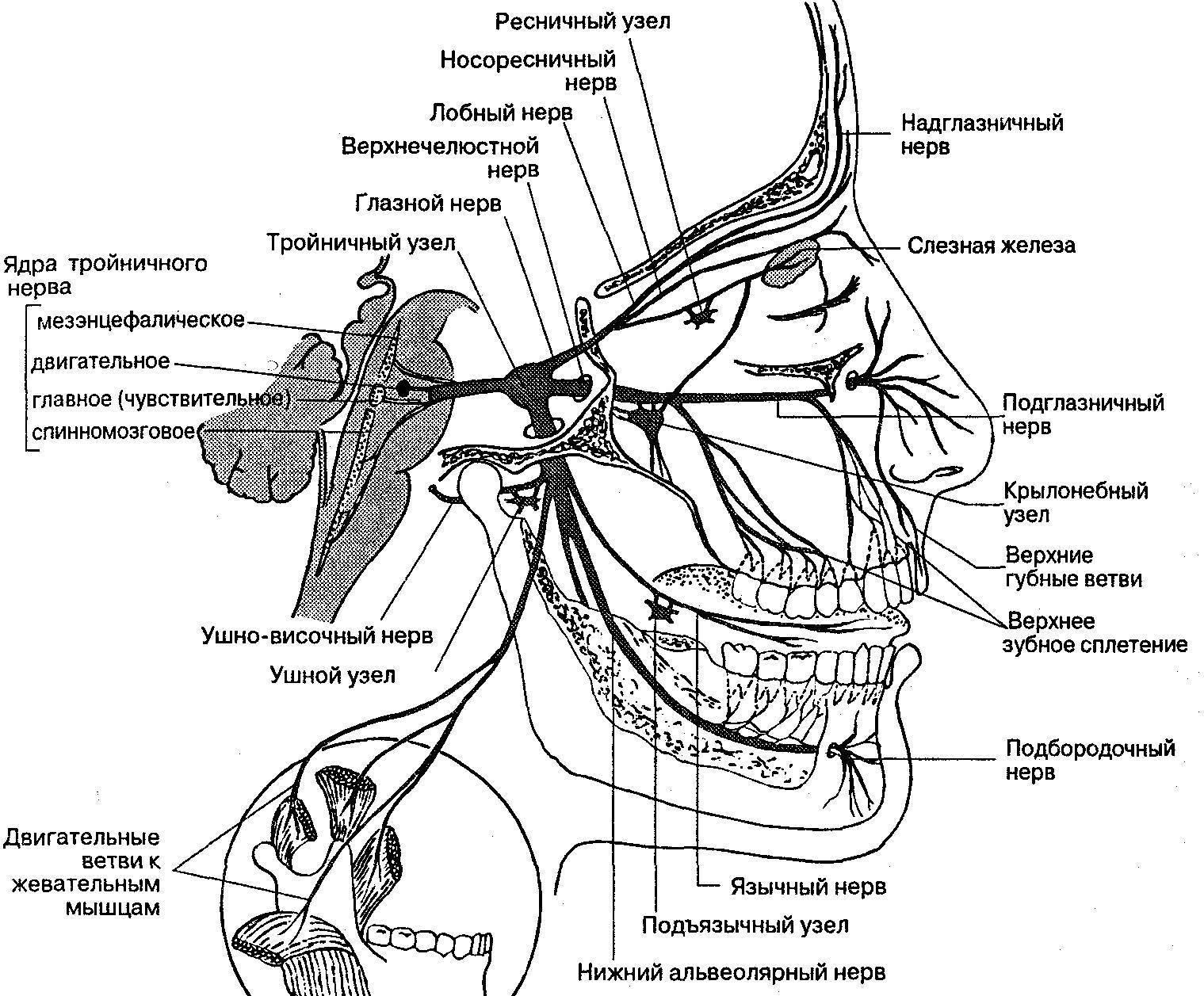 Межреберная невралгия (торакалгия): как проявляется и доступное лечение