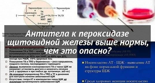 Антитела к тиреопероксидазе повышены: что это значит и какова норма