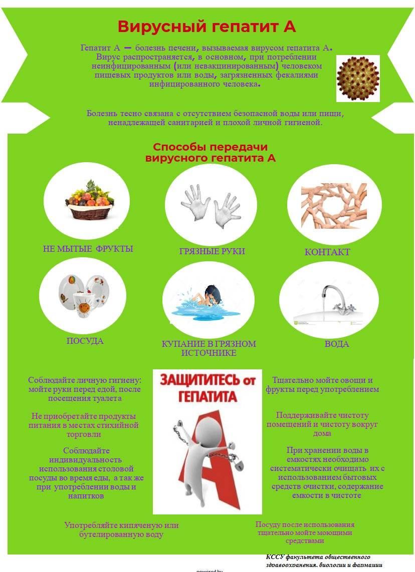 Острый вирусный гепатит а: источники инфекции, симптомы, лечение и профилактика