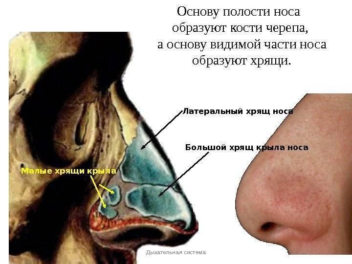 Статьи по болезням носа и околоносовых пазух