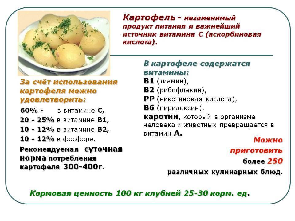 картофель при холестерине
