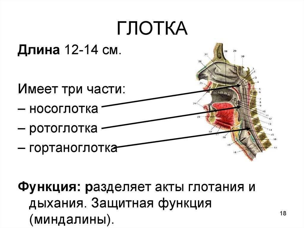 носоглотка болезни симптомы