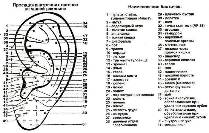 точки акупунктуры на ухе