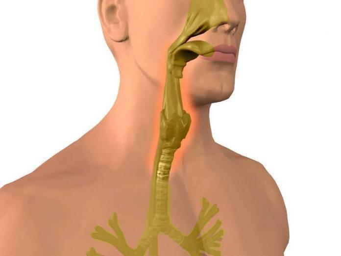 Причины и особенности спазмов в горле