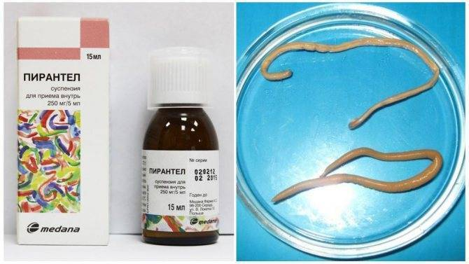 Лучшие таблетки от глистов для лечения и профилактики: названия