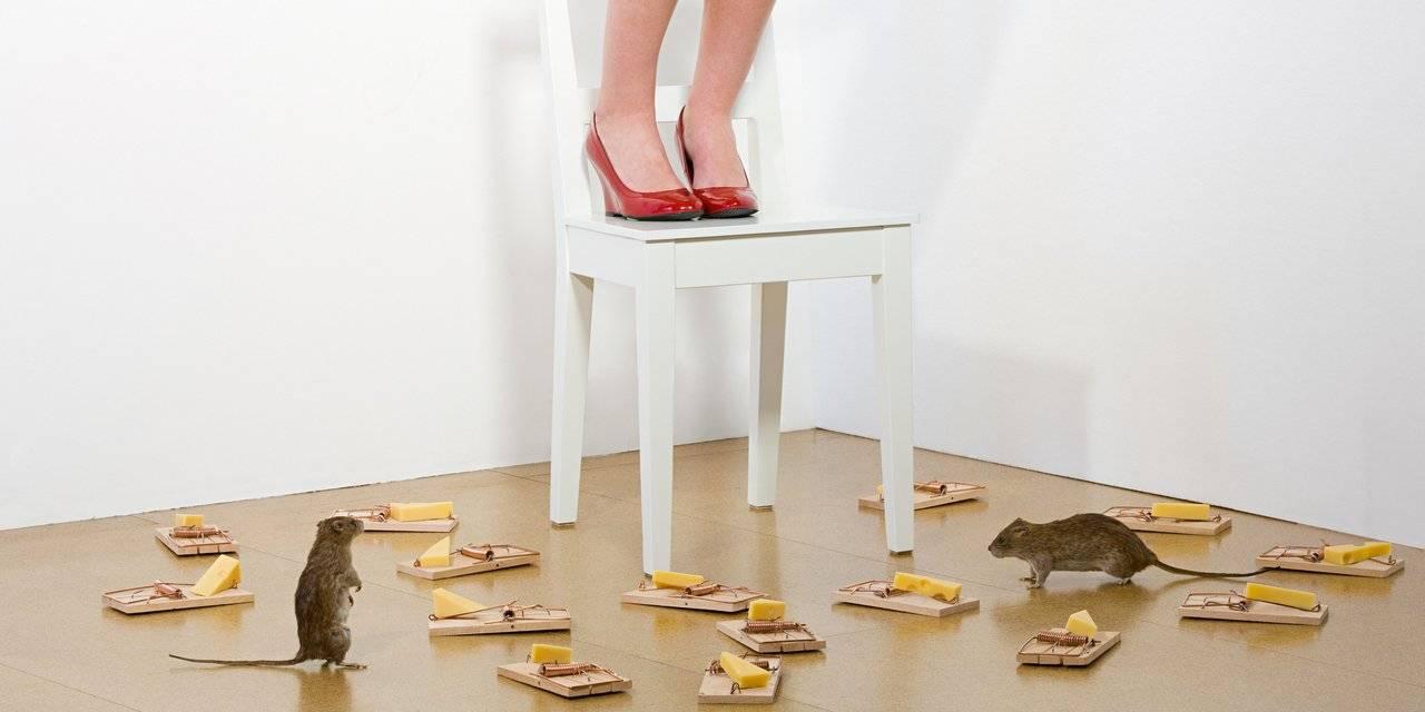боязнь мышей фобия