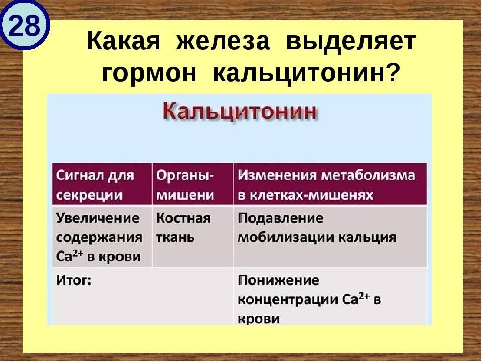 Анализ крови на кальцитонин: для чего делают, подготовка, что показывает (норма и отклонения)