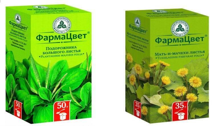 Травы от кашля - как подобрать при сухом кашле и бронхите, для детей и курильщиков