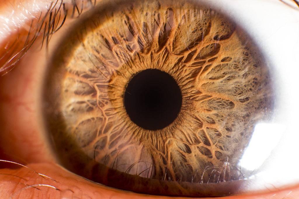 Посмотри в глаза. 10 вещей, которые глаза говорят о вашем здоровье
