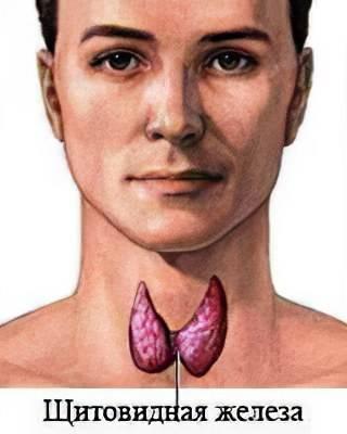 Аит/хашимото, связь с фертильностью, новый взгляд на причины и лечение