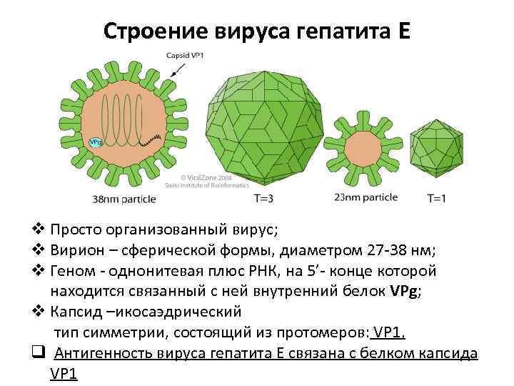 Вирусный гепатит е - симптомы болезни, профилактика и лечение вирусного гепатита е, причины заболевания и его диагностика на eurolab
