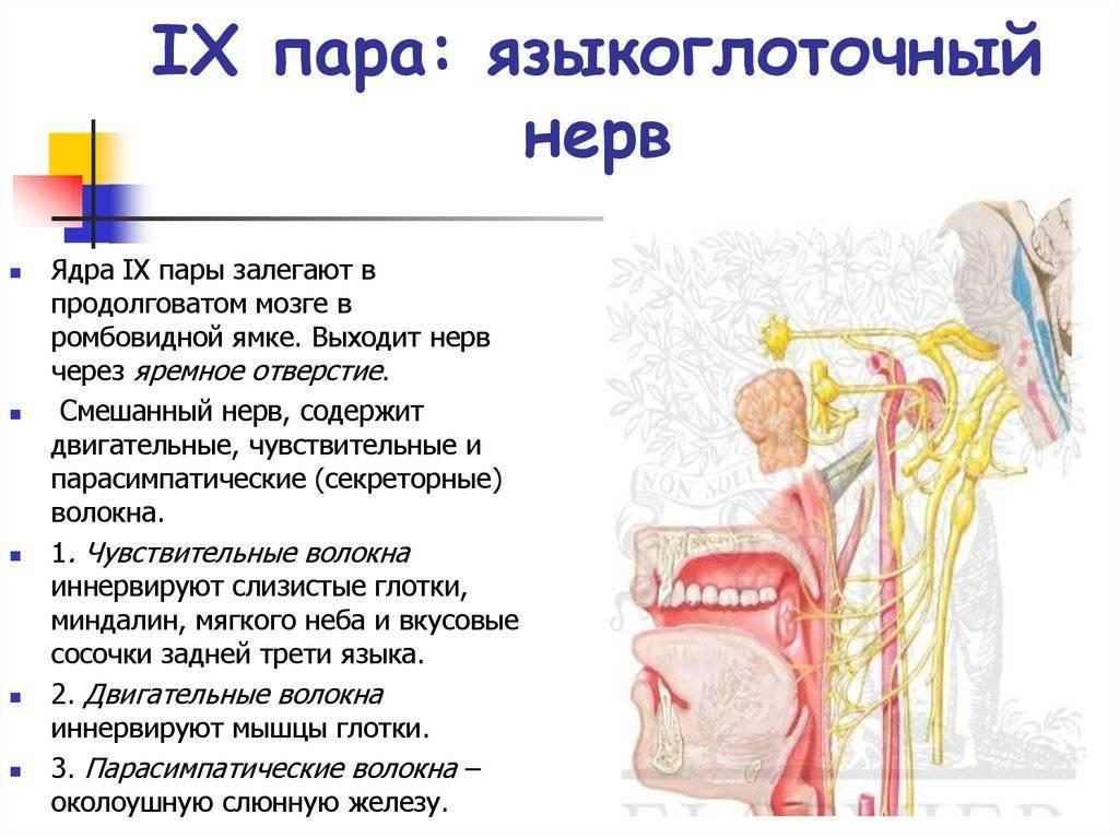 Невропатия языкоглоточного нерва симптомы и лечение