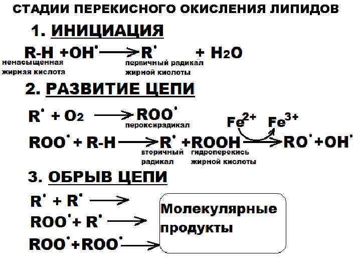 Перекисное окисление липидов - lipid peroxidation - qwe.wiki