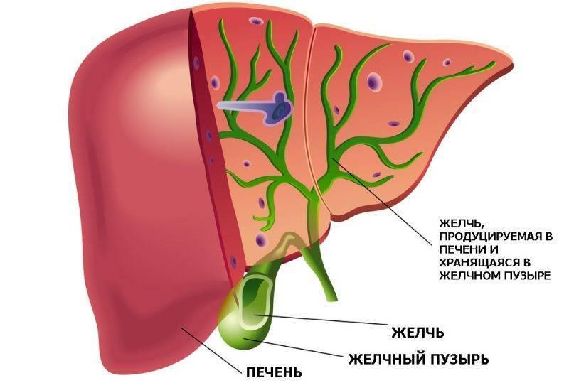 диета при холестазе желчного пузыря