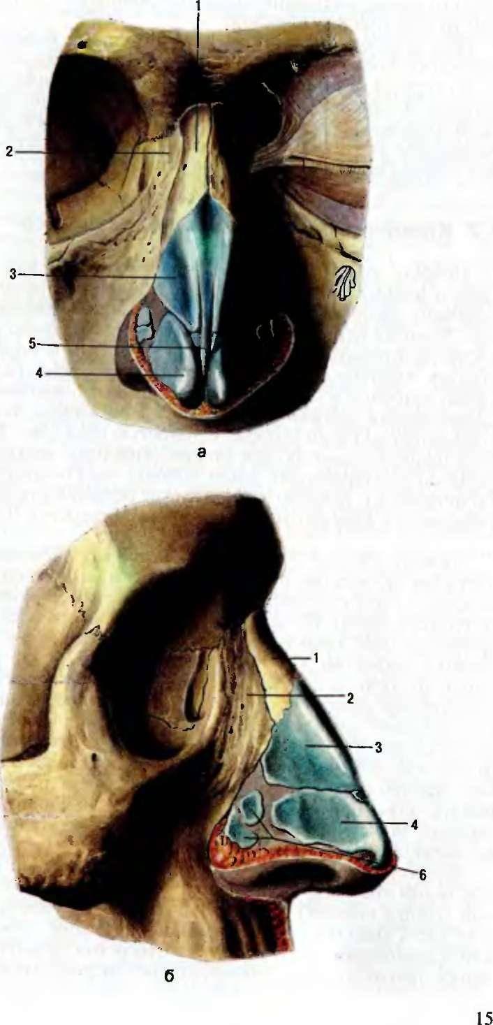 Пищеварительная и дыхательная системы