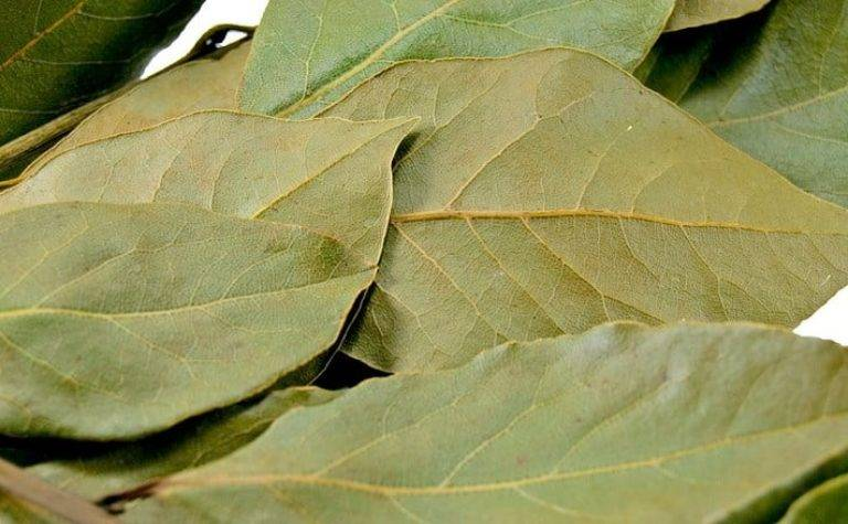 Лавровый лист лечебные свойства при гайморите