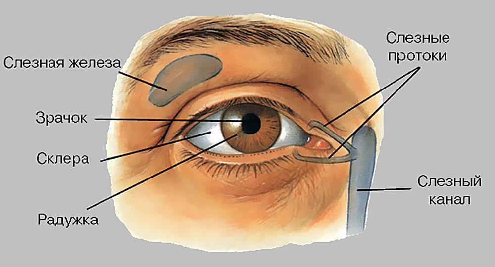 конъюнктивальная полость глаза