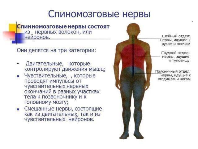 Причины, симптомы и методика лечения межреберной невралгии грудного отдела